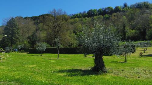 続いて春 Orvieto