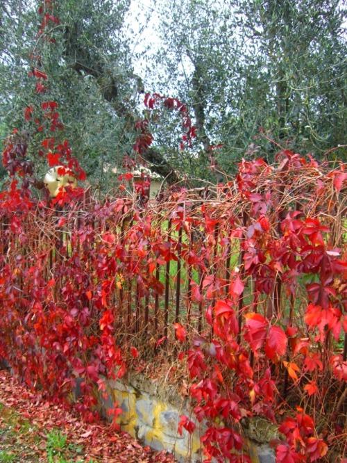 Orvietoの紅葉