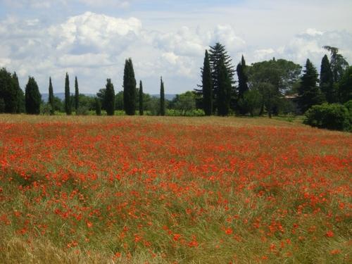 Orvieto近郊2010年6月