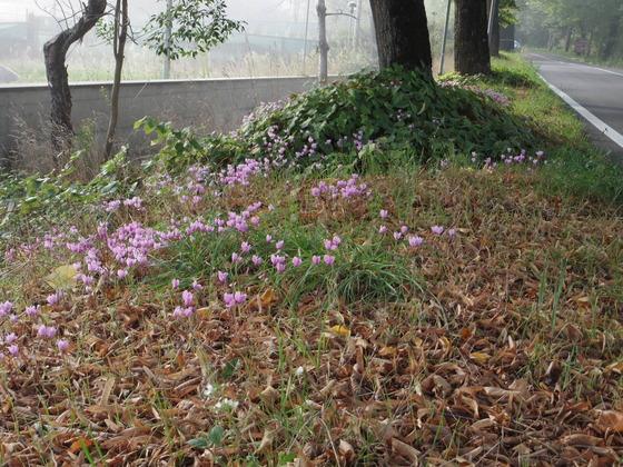 秋です。Orvietoも