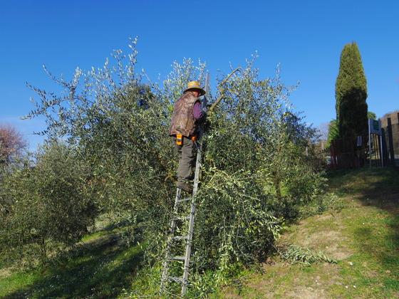3月 Orvieto Pottaturaが終わりました。