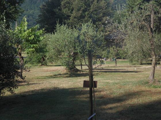乾燥が始まりました。Orvieto