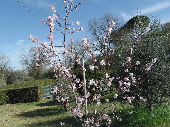 春です。Orvietoも。
