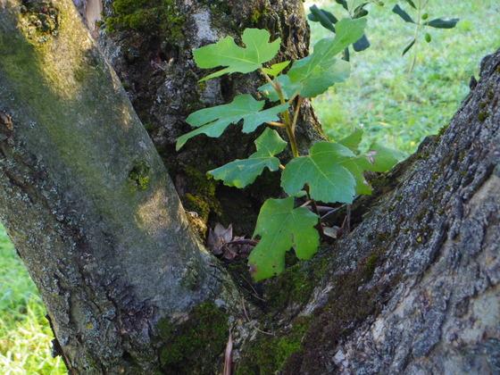 Natura(自然) Orvietoから