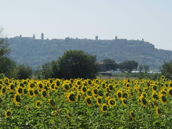 始まった夏!Orvieto