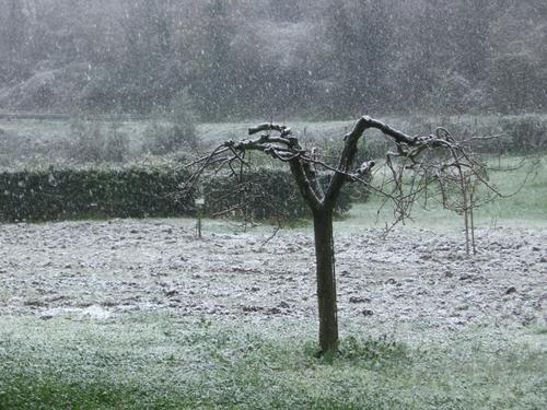 Orvietoの雪!