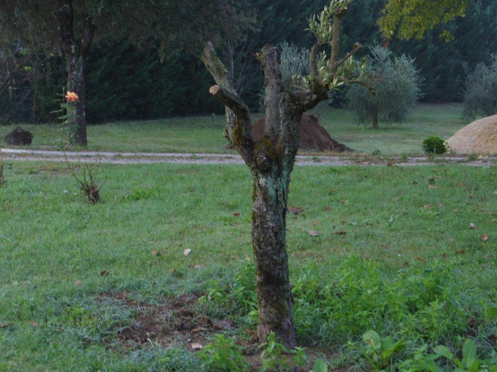 続いて秋です。Orvietoから